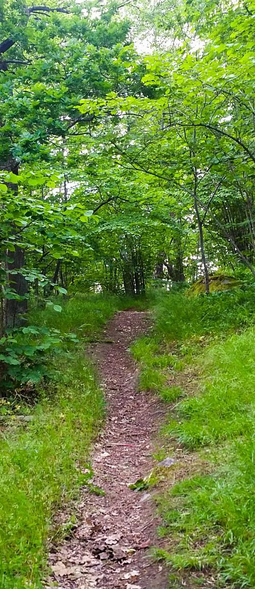 Stigen från Kvarnholmsparken till skogen Fredriksberg på östra Kvarnholmen