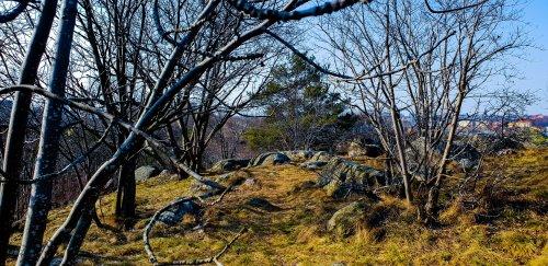 Gräs, mossa och lav börjar ta över de grå och gula klipporna på Bageriberget