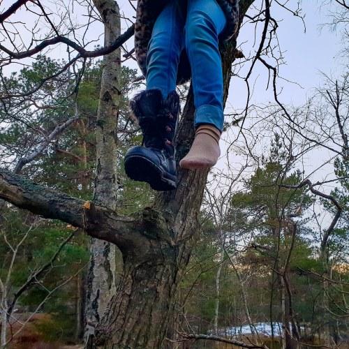 Barn klättrar i träden i Trolldalen i Nacka