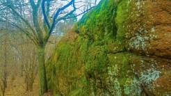 Saftigt gröna mossor på en klippa.