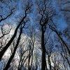 Luonto Metsä Kevät Syksy