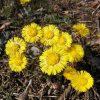 Kukka Kasvi Kevät Luonto