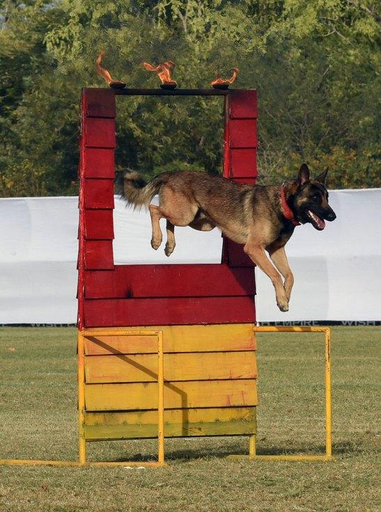 Dog Show Rajasthan Diwas 2017