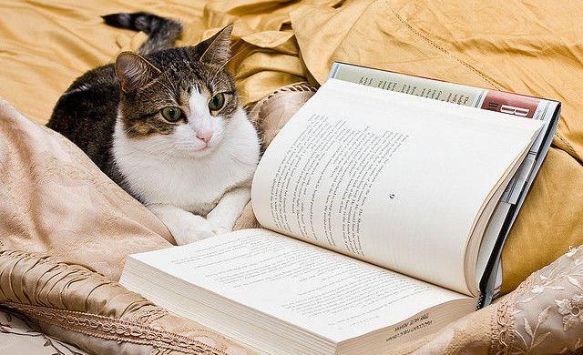 """""""Чело коте книжки"""" или за програмата по литература"""