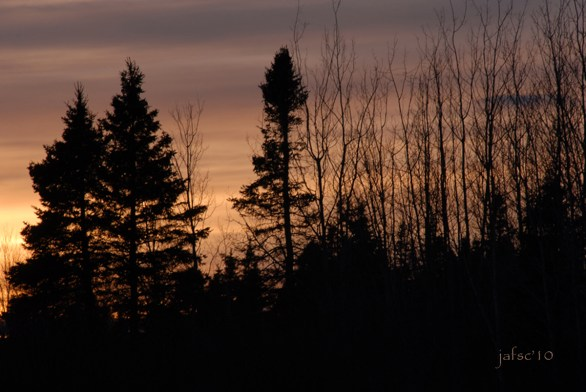 Beyond the trees a sunset