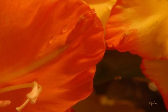 Flowers in love ...