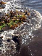 Algas y olas