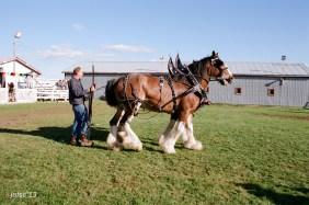 Horses Exhibition in Shigawake