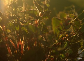So beautiful caress of light to the plants