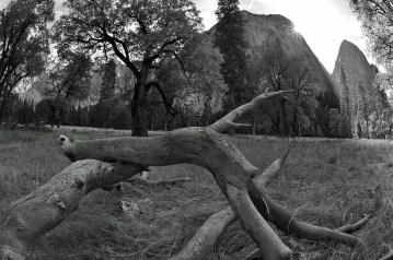 Yosemite IV
