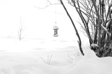 Snow Yes, Birds No