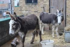 2 Donkeys 2