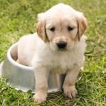 potty train small dog