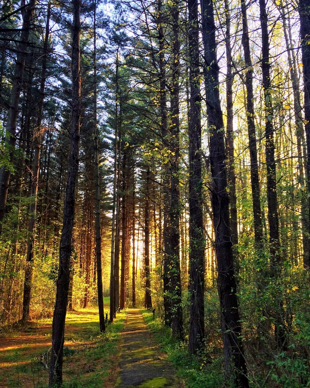 Sunrise in Blackbird State Forest, Smyrna, Delaware USA Vaycarious.com