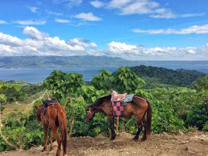 Horses at Taal Crater Lake, the Philippines. Vaycarious.com