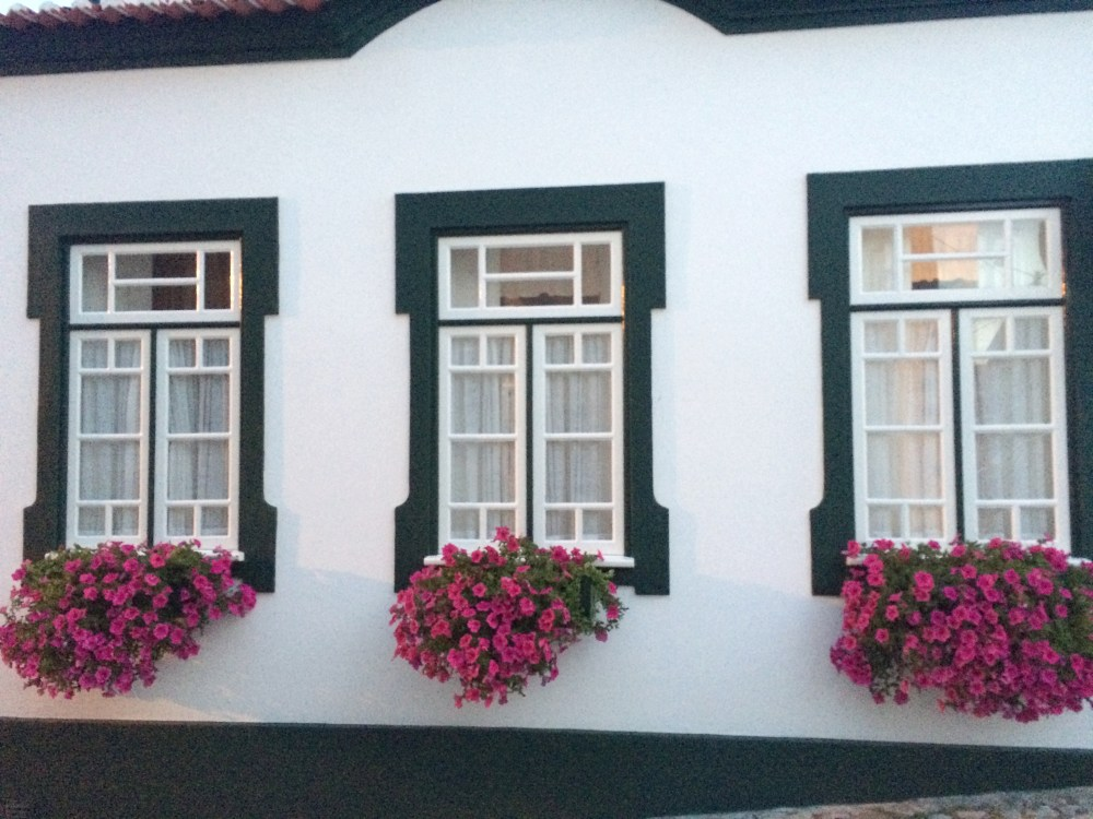 Aveiro, Portugal https://vaycarious.com/2017/02/1/flowers