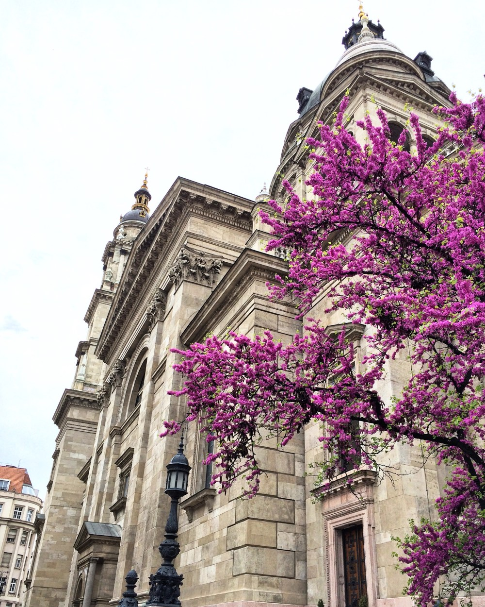 Flowers in Budapest http://vaycarious.com/2017/02/1/flowers
