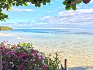 Flowers on Camotes Island http://vaycarious.com/2017/02/01/flowers