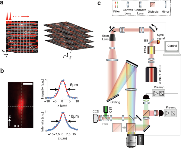 Figure 1: Schematic and principle of scanned temporal focusing imaging system.