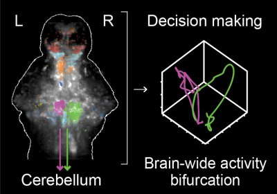 """Neuronal basis of decision making at the single trial level"" published in Cell"