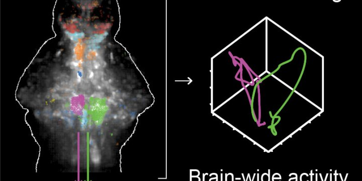 """""""Neuronal basis of decision making at the single trial level"""" published in Cell"""