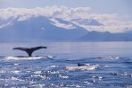 Tail of a Humpback Whale in Frederick Sound