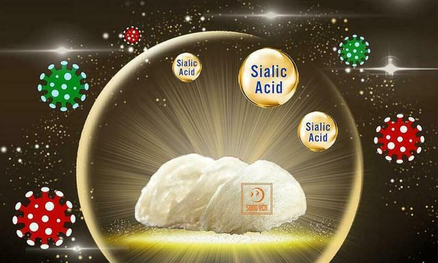 sialic acid trong yến sào có góp phần chống lại các tác nhân vi khuẩn, virus