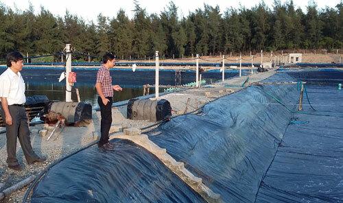 Hồ nuôi tôm có sử dụng đất hiếm tại Hà Tĩnh. Ảnh: DA.