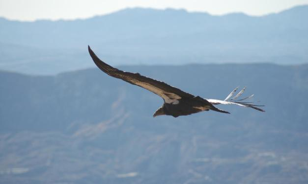 FIGHT FOR SURVIVAL | Local activists work to balance nature and man to preserve endangered birds