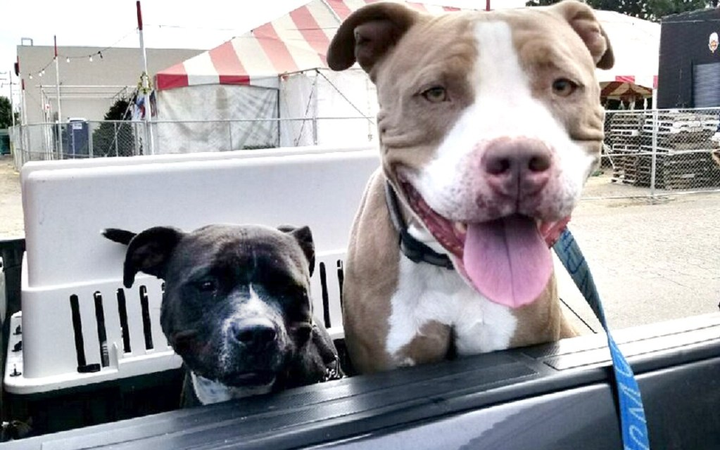 PUBLIC NUISANCE CHALLENGED | Judge rules pet owner's rights violated in seizure of dogs without hearing