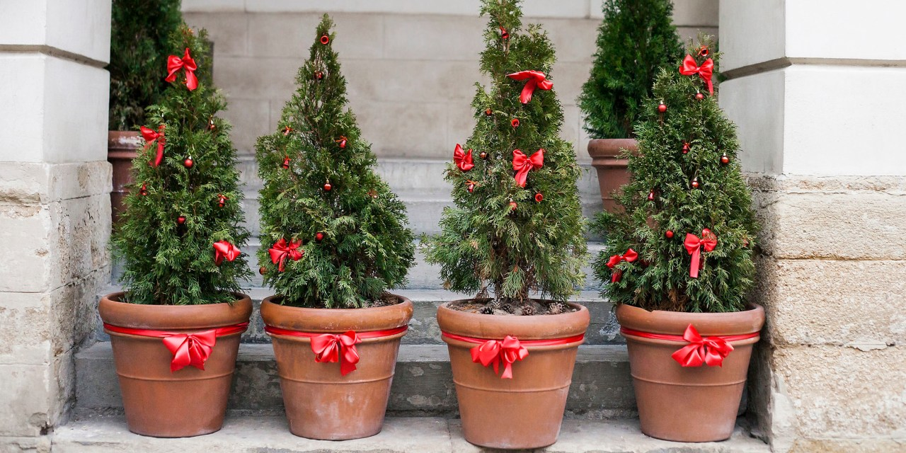 EYE ON THE ENVIRONMENT   Local tree lover finds alternative to either artificial or cut Christmas tree