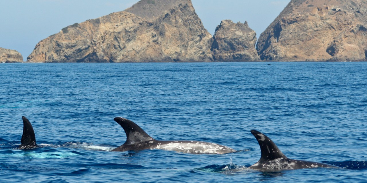 HAPPY 40TH! | Channel Islands National Park celebrates four decades