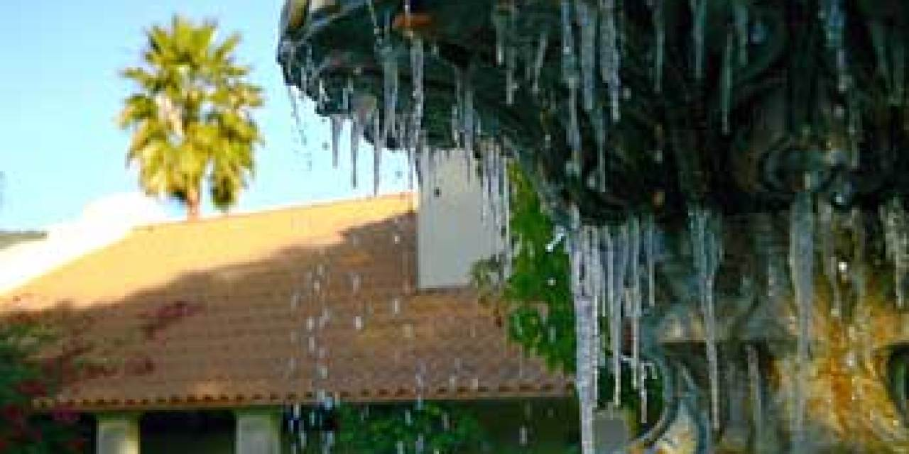 Palm trees and icicles