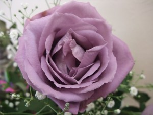 Blue_Rose_APPLAUSE