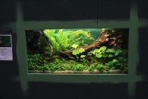 Schönes Aquarium am Stand von Trianea e.V._resize