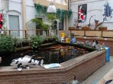 09 Koi-Ausstellung Das Aquarium