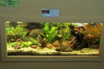 Aquarium, Stand Hellersdorf_resize