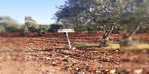 عفرين : الفصائل تستولي على مزارع الزيتون في جندريسه