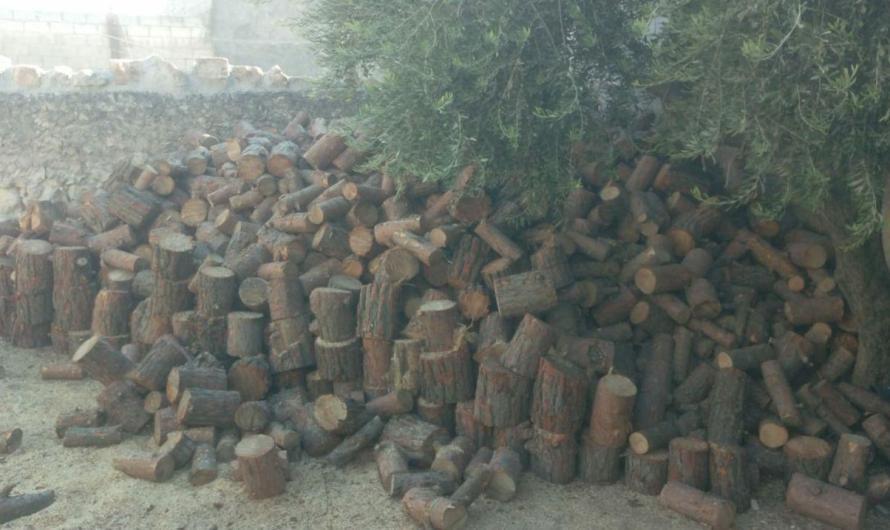 """فصيلان في """"الجيش الوطني"""" يعترفان بتورط عناصرهم في قطع أشجار عفرين"""