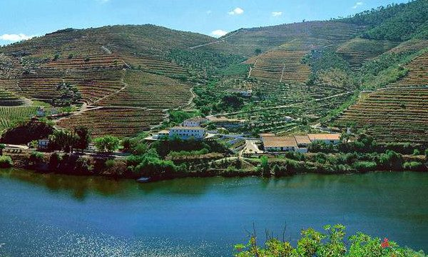 quinta-vargellos-oporto-viñedos
