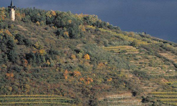 zobinger-Heilingenstein-viñedos