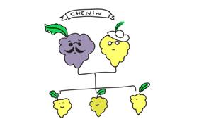 chenin blanc variedad de uva blog