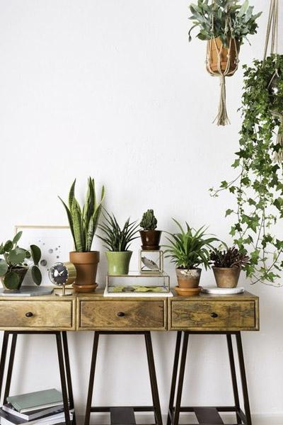 De mooiste hangplanten voor binnen en buiten  Praxis Blog