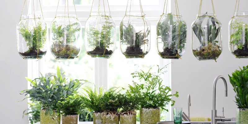 De tuin en woonplant van oktober  Praxis