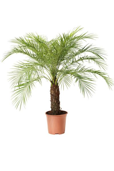 Stralende luchtzuiverende kamerplanten in huis of op