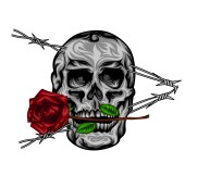 skull2-01