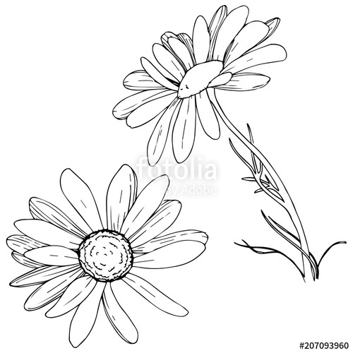 937 Daisy duck vector images at Vectorified.com