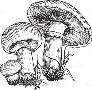 mushroom drawing vectorified