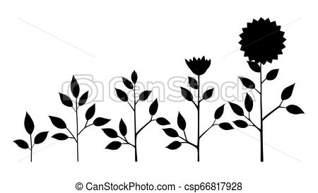 Sunflower Silhouette Vector at Vectorified.com