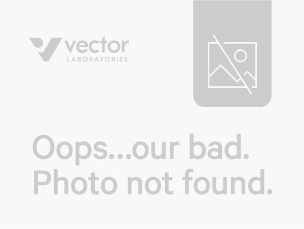 VECTASTAIN ABC-AmP Kit, for Rabbit IgG, Chemiluminescent